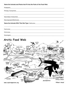 arctic_foodweb_activity72