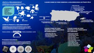bioluminiscencia-ptorico