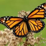 mariposa-e1417611795539