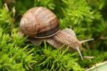 snail_by_darBis