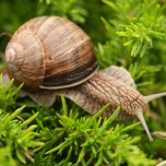 snail_by_darBis
